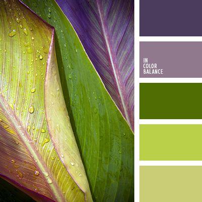 color lila, color malva, color púrpura oscuro, color púrpura pálido, de color verde lechuga, púrpura y verde, púrpura y verde lechuga, tonos verdes, tonos violetas, verde claro, verde lechuga y verde, verde lechuga y violeta, verde oscuro, verde y verde lechuga, violeta y verde.
