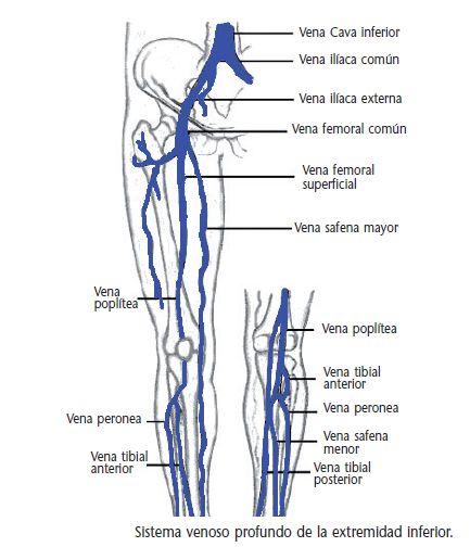 Mejores 8 imágenes de material de anatomia en Pinterest | Miembro ...