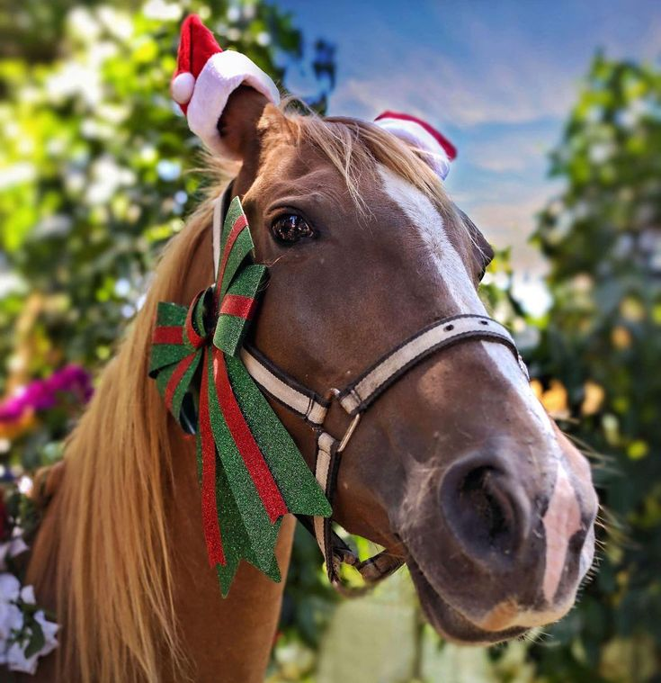 Hayyyyy its nearly Christmas  #christmas2017 #christmas #equine #equinevet #lovehorses #horses #manly #manlyroadvet #equineunit #ig_horses #pocket_pets #instagram #instahorses #foto_fanatics #horsesofinstagram #equinevet #veterinarian #vetlife #ig_captures #ig_myshot #ig_today #ig_great_pics