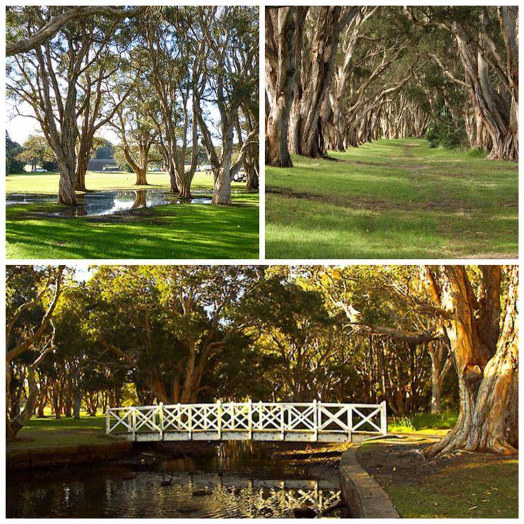 Centennial park sydney