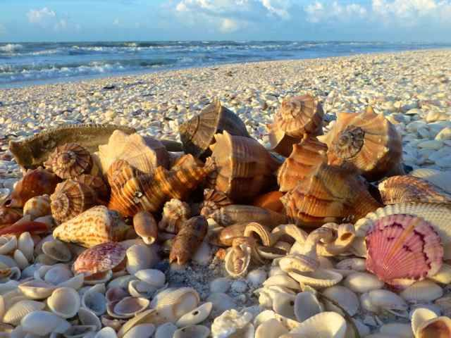What State Is Shell Beach Sanibel Island