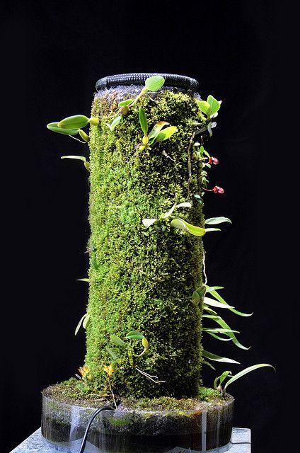 Les 226 meilleures images du tableau aquarium mur vegetal for Mur vegetal aquarium