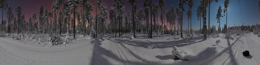 Incredible night time forest panorama.