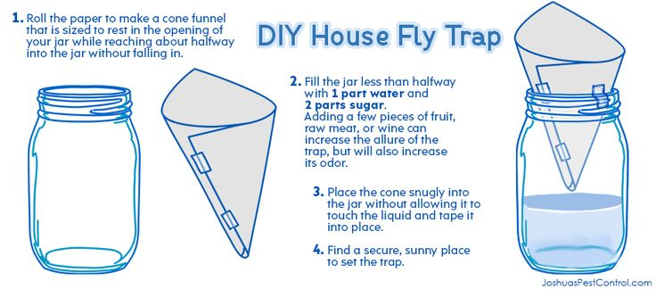 House fly trap diy