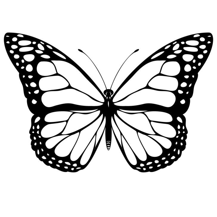 Артисту, шаблон бабочки для раскраски распечатать