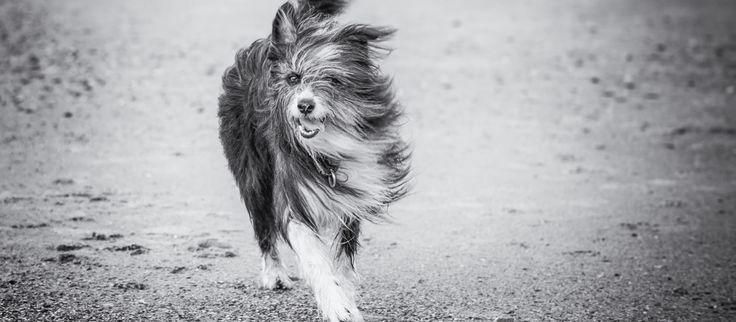 Genießen Sie Ihren Urlaub im MeerBlickD21 mit Ihrem Hund ►►  Hundebesitzer wissen wie kompliziert es sein kann, seinen vierbeinigen Freund mit in den Urlaub zu nehmen. Im neuen HotelMeerBlickD21 auf Norderney ist das kein Problem: Bei uns können Hund und Herrchen gemeinsam entspannen.