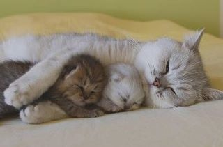 awe, so sweet: Mothers Love, Kitty Cat, So Cute, Cat Naps, Naps Time, Baby, So Sweet, Sweet Dreams, Animal