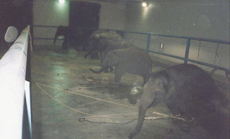The Sadness Of Circus Elephants, In One Photo