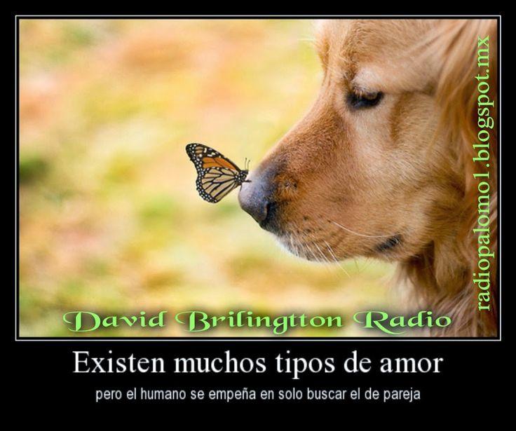 Existen muchos tipos de amor,pero el humano solo busca el de pareja.... ~ Radio Palomo