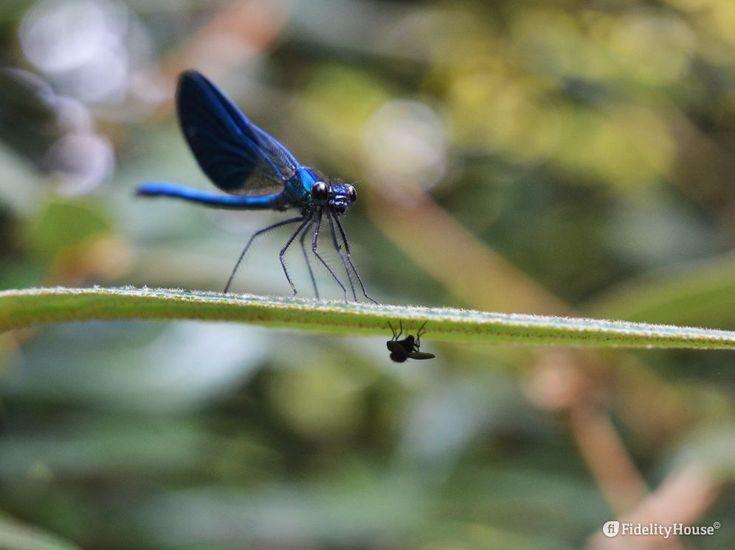"""""""Mors tua vita mea"""", si sa. Lo sa la libellula che in agguato attende un insetto di cui nutrirsi, lo sa la mosca che, nascondendosi, vuole vivere."""