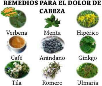 plantas medicinales y remedios para el dolor de cabeza