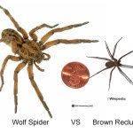 Spider Wolves And Brown On Pinterest