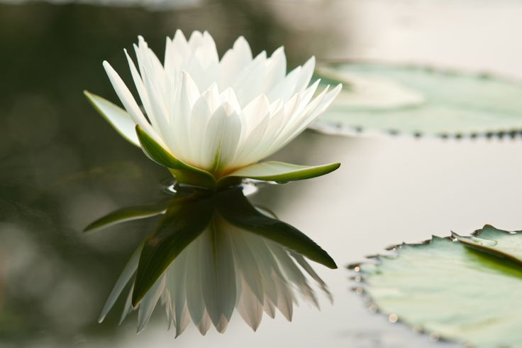 Meditera i Stockholm - Meditationskurser och buddhism i Stockholm, Sverige
