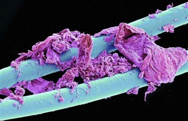 Alucinantes tomas microscópicas de 15 objetos de la vida diaria | N+1: artículos científicos, noticias de ciencia, cosmos, gadgets, tecnologíantal usado Hilo de