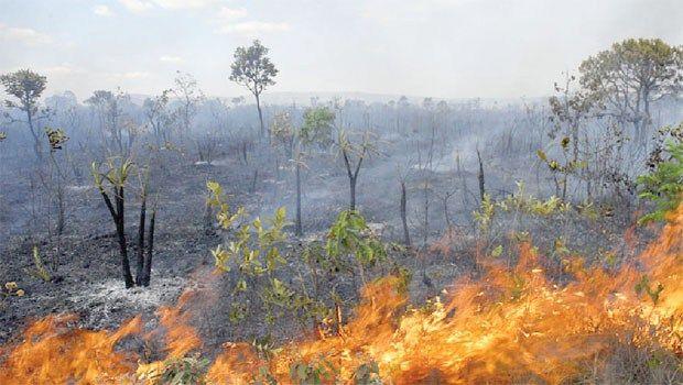 Queimadas estão entre os principais fatores de degradação do bioma Cerrado, que abriga mais de 10 mil espécies de plantas