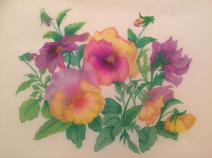 Pansies - sold