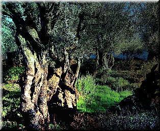 73 best images about garden of gethsemane on pinterest - Trinity gardens church of christ ...