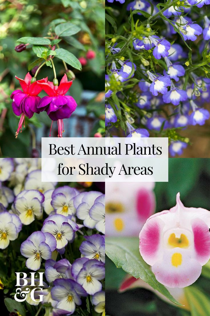 Transform garden shade spots in your backyard into a spring-to-fall shade-flowers show. Start with plants like Fuchsia, Balsam, Lobelia, Impatiens, and more. #flowers #gardening #shadegarden #landscaping