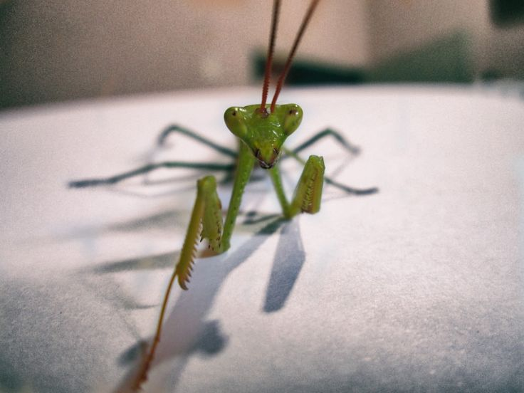 It came, posed for some pics and I'm not even sure of his name ... Mantis Mantis?