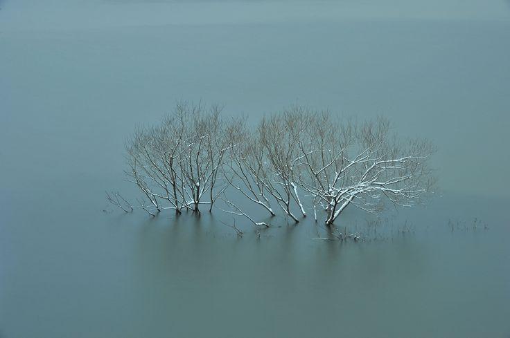 The first snow  はつゆきがふりつもるころにあなたは 北海道石狩郡当別町青山 当別ダム ふくろう湖   雪が解ける来春 ふくろう湖のとある場所に、桜とアジサイを植えようと計画しています。  春の訪れが遅いふくろう湖は観光の季節となり 水面に写り込む桜の花を楽しめると思いますし 初夏から初秋まで花期の長いアジサイも色を添えてくれると思います。  他にも様々な花とふくろう湖の競演を楽しんでもらえれば 当別町の町興しの一端を担えるかと考えております。  今後は、当方で育成している蛍の放流や、同じく当方で栽培している蓮や睡蓮の移植なども検討しています。  この周辺は、ノスリ、トビ、オジロワシ、ミサゴの他に カワウ、マガモ、コガモ、カイツブリ、アオサギ、カワセミ、アカゲラなどなど、たくさんの野鳥が見られ 季節の渡り鳥、ハクチョウ、オシドリ、オオルリ、キビタキ、アカハラ、シロハラ、キセキレイ、ベニマシコ、ベニヒワ、ムクドリ、タヒバリ、ツグミなども確認できるほか センダイムシクイ、クマゲラ、ミヤマカケス、エゾフクロウ、カワガラス、ヤマセミなどの希少種との出会いも期待できます。