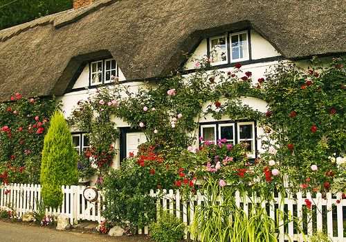 Cottage garden white picket fence roses doors for English garden tools yeah yeah yeah