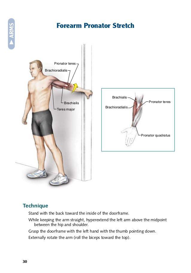 brachialis exercise - photo #18