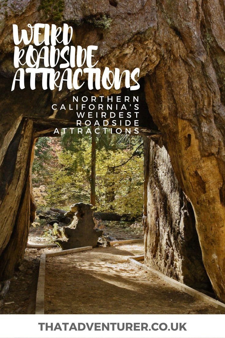 Weird roadside attractions in northern California From drive thru tree to massive statues of corn, a Northern California road trip is full of weird road side attractions. Make sure to take this list with you on your road trip and check them off as you drive!