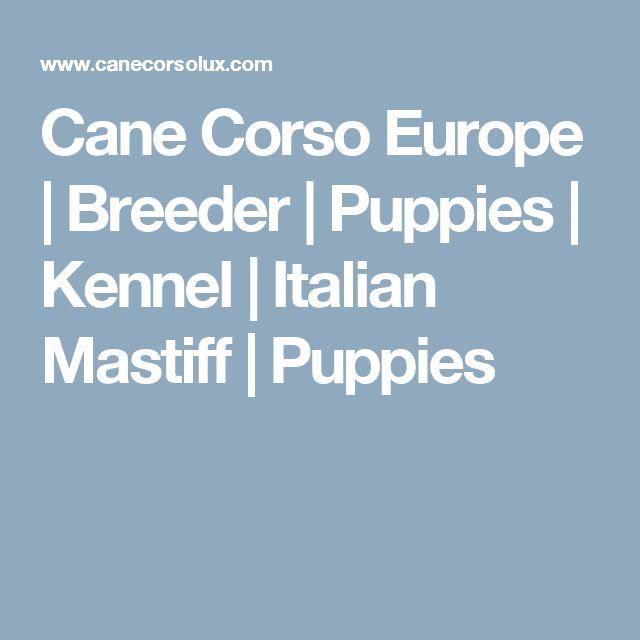 Cane Corso Europe | Breeder | Puppies | Kennel | Italian Mastiff | Puppies
