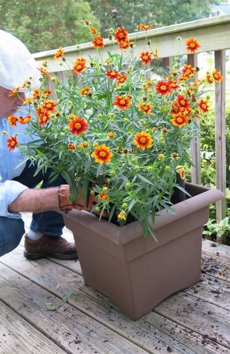 These variations of fall flowers are perfect for an outdoor container garden in September and October!
