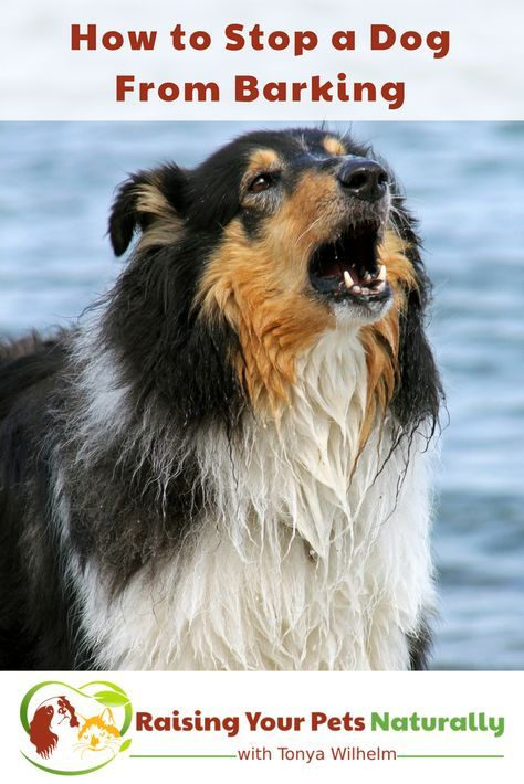 How to Stop a Dog from Barking. Learn How to Train a Dog Not to Bark. Why Do Dogs Bark? #raisingyourpetsnaturally