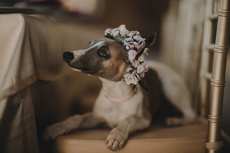 Pet dog wear flower crown. Photography by Andrea and Federica