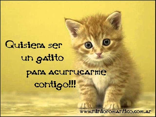 Imagenes De Gatitos Con Frases Tiernas Amor Pinterest