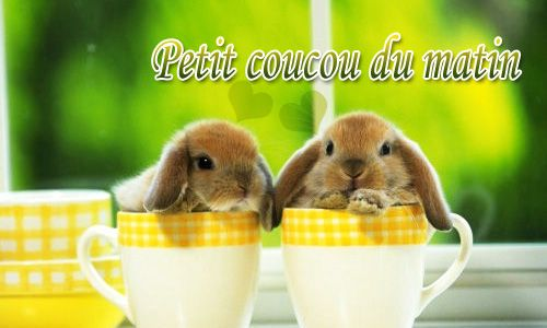 17 best images about carte animaux on pinterest cas bon weekend and messages - Image animaux gratuite ...
