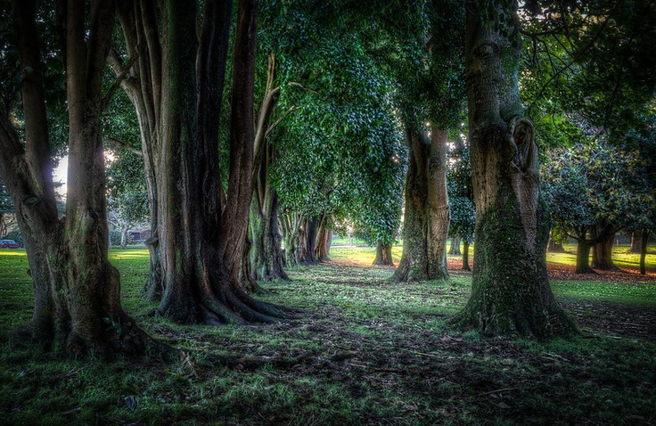 Auckland Autumn - Ian Rushton Photography