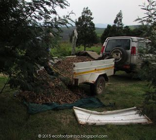 Wood chip mulch to assist in preventing evapouration