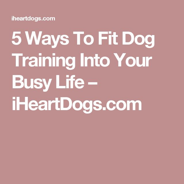 5 Ways To Fit Dog Training Into Your Busy Life – iHeartDogs.com Read more in http://natureandhealth.net/