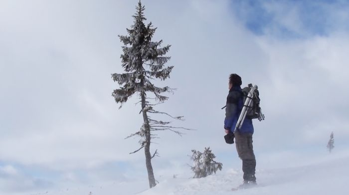 Old Tjikko: A Clonal Tree That Is As Old As Woolly Mammoth