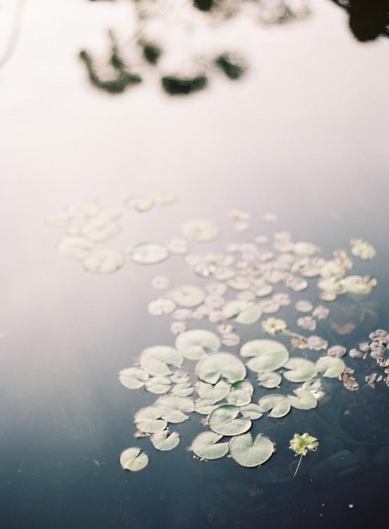 lily pond | jenhuangphoto.com