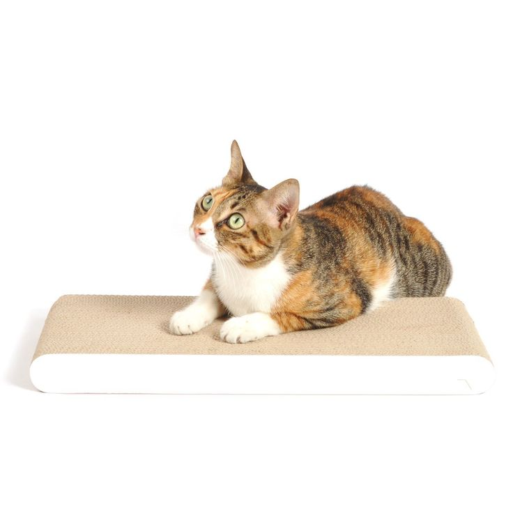 1000 ideas about cat scratcher on pinterest cat trees cat furniture and scratching post - Designer cat scratcher ...