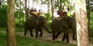 Phuket Safari Bangpae Safari Elephant trekking Bangpae waterfall and canoe.
