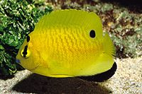 Specials - Saltwater Fish Wholesale and Small Animal Wholesale