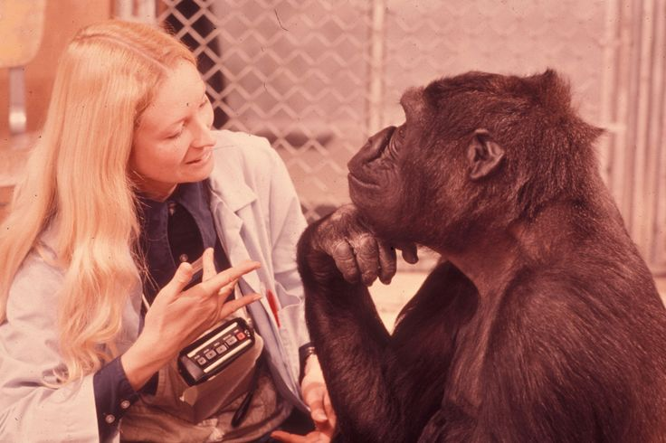 "Francine ""Penny"" Patterson (b. 1947) is an animal psychologist, best known for her work with Koko, the gorilla that learned to communicate through signs. She taught Koko more than 1000 signs of a modified version of American Sign Language, which she..."