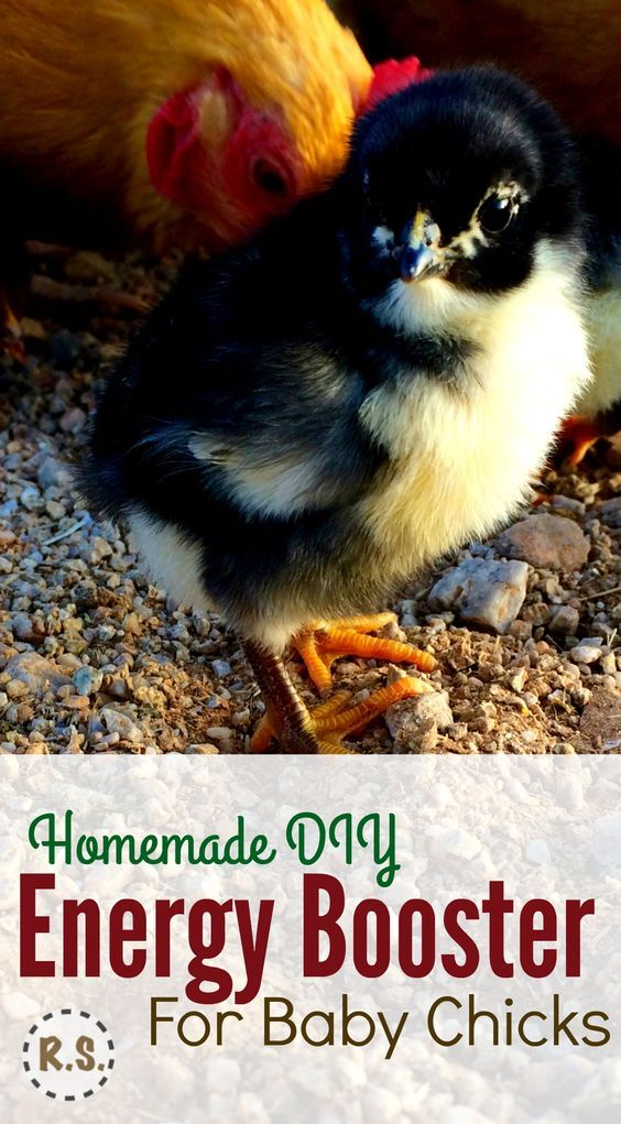Raising baby chicks? Here's a DIY energy booster or electrolyte recipe you can put in their water. Great for their health & easy for beginners to make. Important to getting your chicks off to a great start! Backyard chickens.