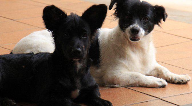 Dezembro vai ser mês de campanha contra abandono de animais