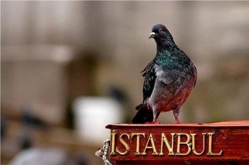 İstanbul, Turkey.