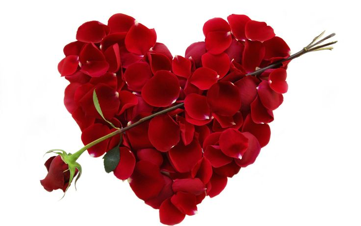 Valentine's Day Rose Pictures.  Wallpaper  Gallery  Miscellaneous Valentines Day Rose Cupid Arrow