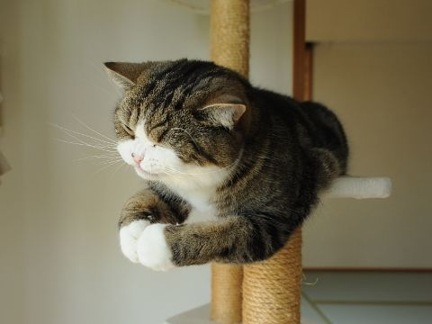 {praying paw pose} Maru