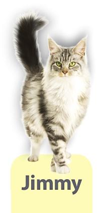 Nume de cod: Jimmy    Specializarea: Expert in sanatatea pisicilor    Misiunea: sa va informez despre cum puteti sa va mentineti pisica sanatoasa