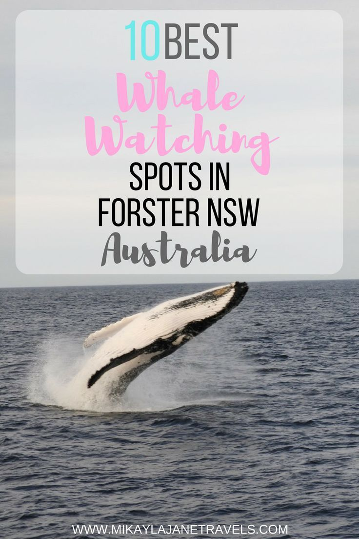 10 Best Whale Watching Spots In Forster NSW Australia | Best Things To See and Do In NSW Australia | Places To Visit In NSW Australia | Travel Tips For Australia | www.mikaylajanetravels.com