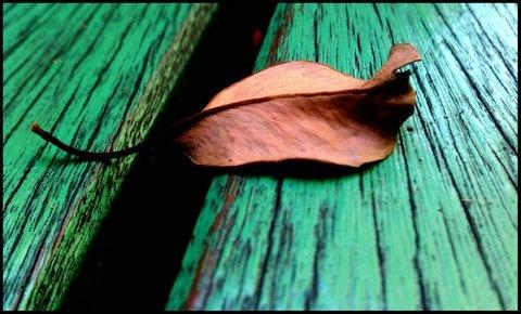 leaves: Leaves